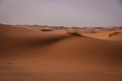 Trail across the dune